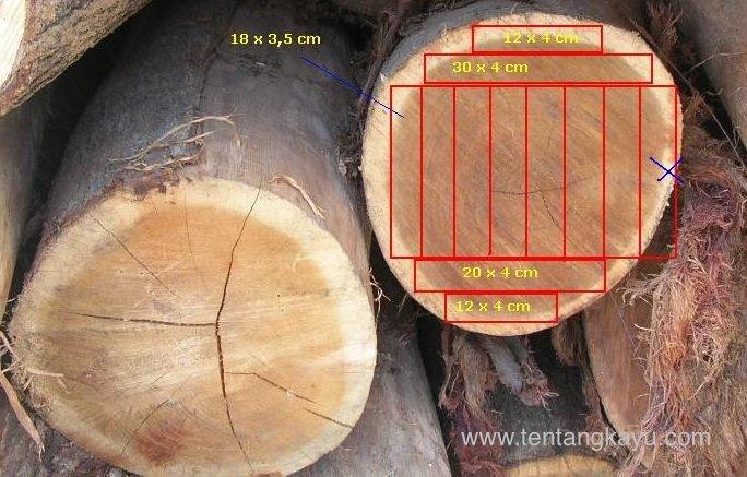 Cara Cepat dan Akurat Mengukur Volume Pohon dan Potensi Tegakan Nyawai (Ficus spp.)