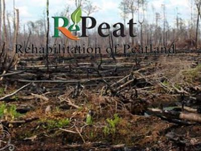 RePeat (Rehabilitation of Peatland)