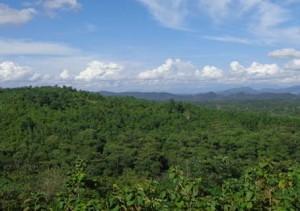 hutan kecil