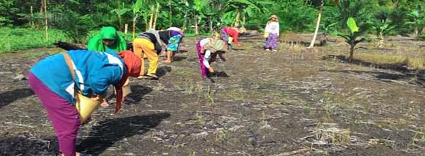 Peladangan Gilir Balik, Salah Satu Bentuk Kearifan Lokal Masyarakat Loksado
