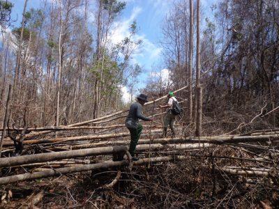 Lahan Gambut  Menjerap Karbon 5 Kali Lipat di Banding Hutan Sekunder