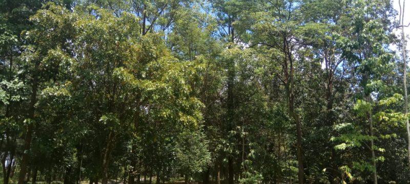 Lingkungan BP2LHK Banjarbaru yang Nyaman dan Aman Bagi Satwa